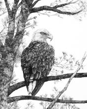 Perched Eagle Print
